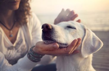 5 Do It Yourself Cbd For Dogs Ideas You Will Certainly Have Missed Out On